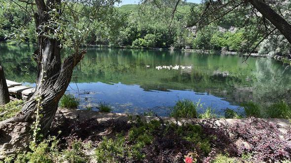 Karagöl'e 290 ağaç dikildi